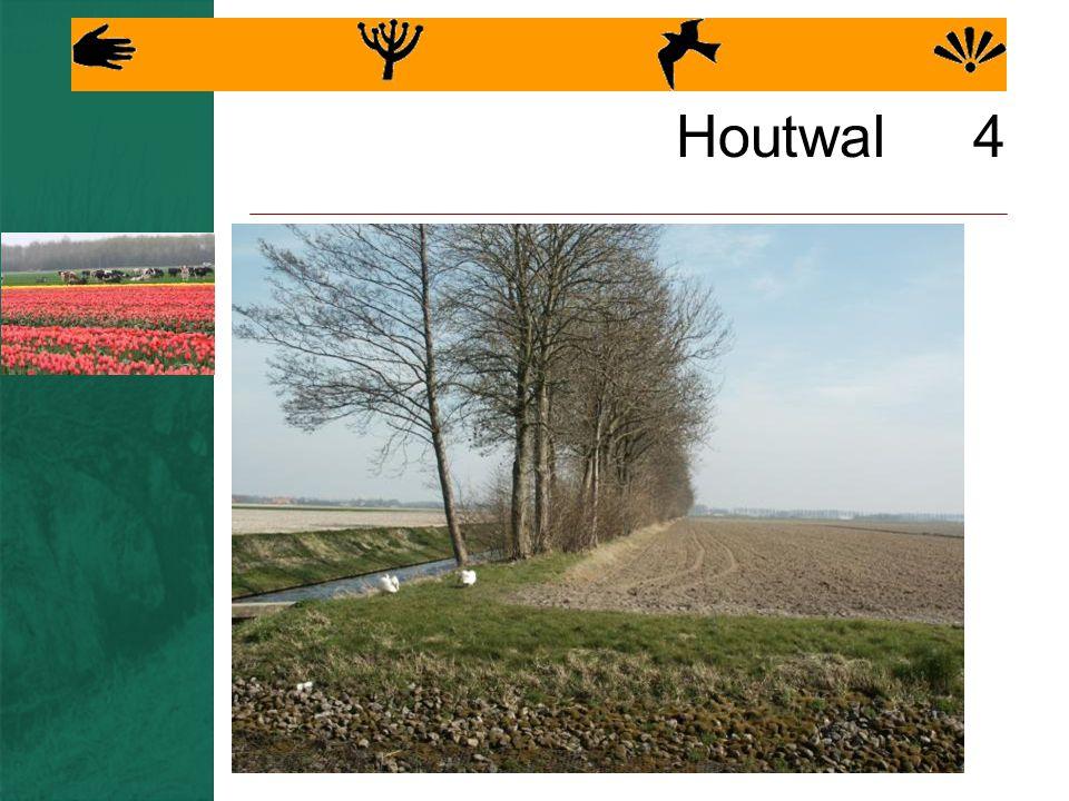 Houtwal 4