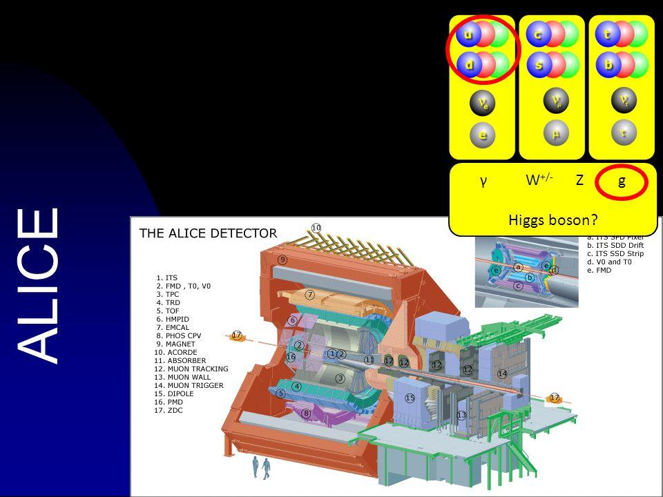 63 ALICE γ W +/- Z g Higgs boson?