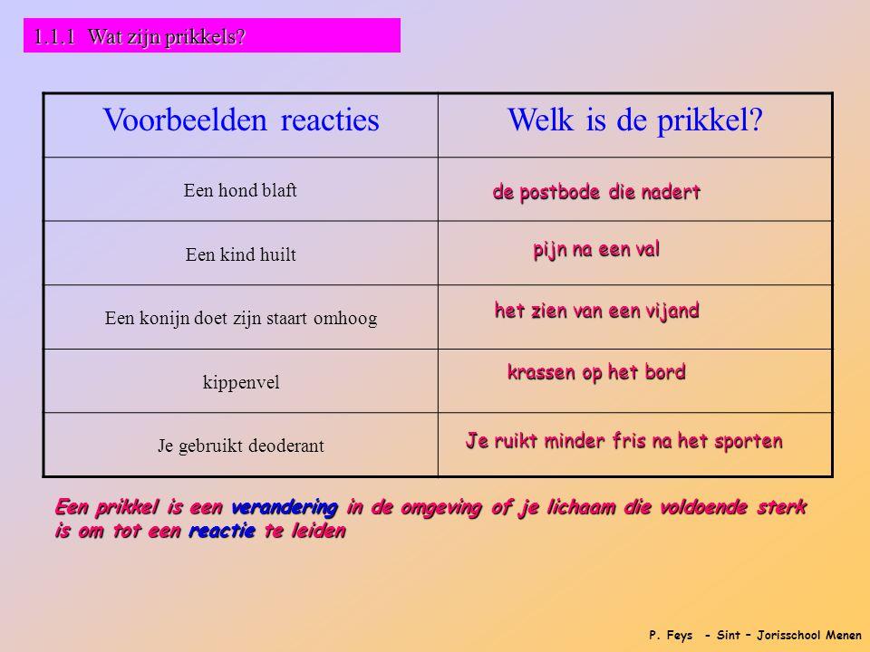 P. Feys - Sint – Jorisschool Menen 1.1.1 Wat zijn prikkels? Voorbeelden reactiesWelk is de prikkel? Een hond blaft Een kind huilt Een konijn doet zijn