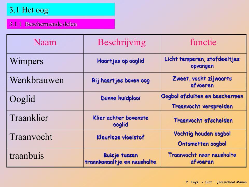 P. Feys - Sint – Jorisschool Menen 3.1 Het oog 3.1.1 Beschermende delen NaamBeschrijvingfunctie Wimpers Wenkbrauwen Ooglid Traanklier Traanvocht traan