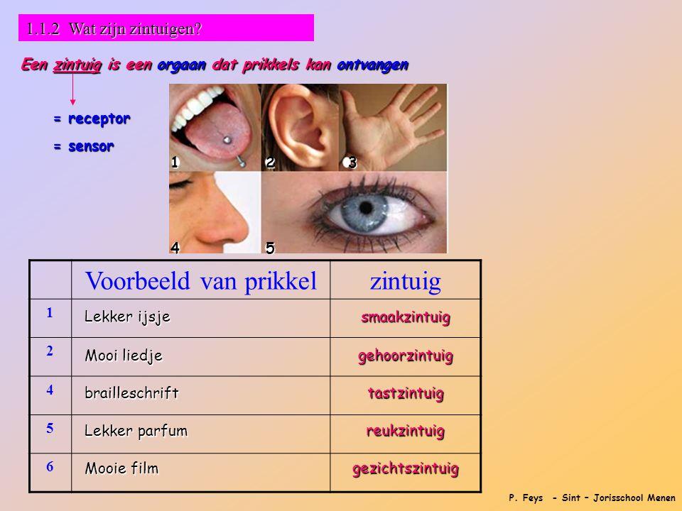 P. Feys - Sint – Jorisschool Menen