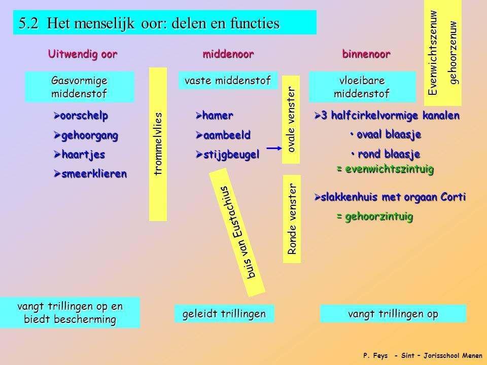 P. Feys - Sint – Jorisschool Menen 5.2 Het menselijk oor: delen en functies Uitwendig oor middenoorbinnenoor  oorschelp  gehoorgang  haartjes  sme