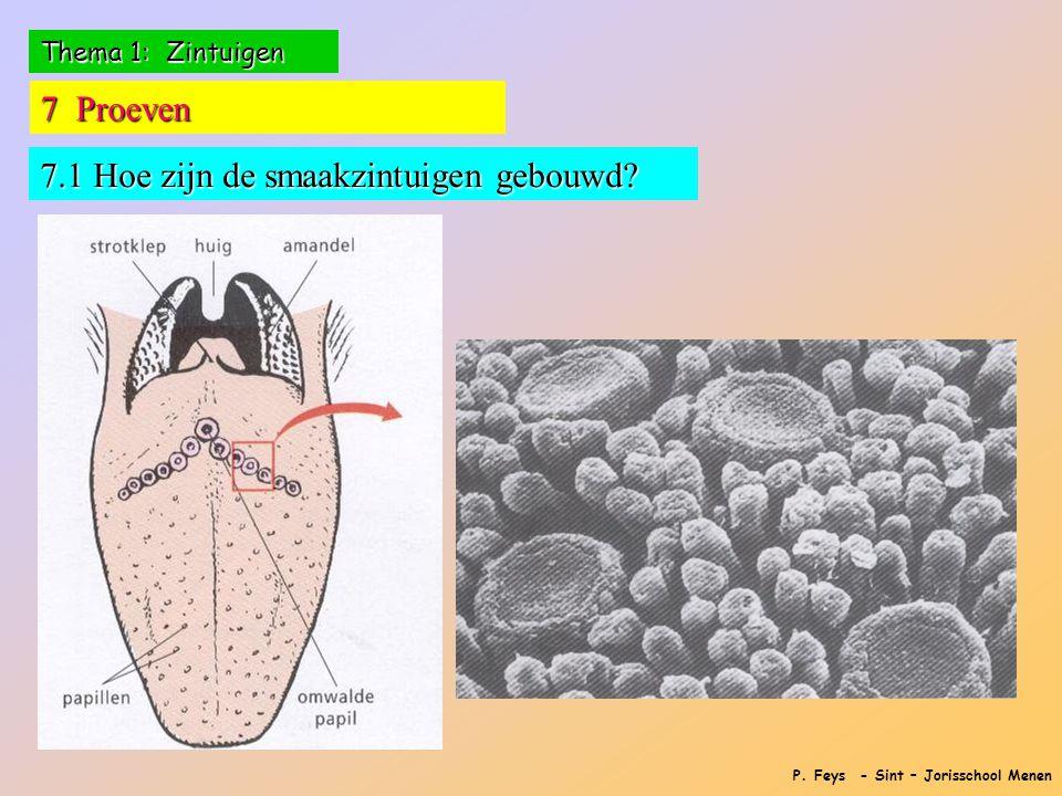 P. Feys - Sint – Jorisschool Menen 7 Proeven 7.1 Hoe zijn de smaakzintuigen gebouwd?