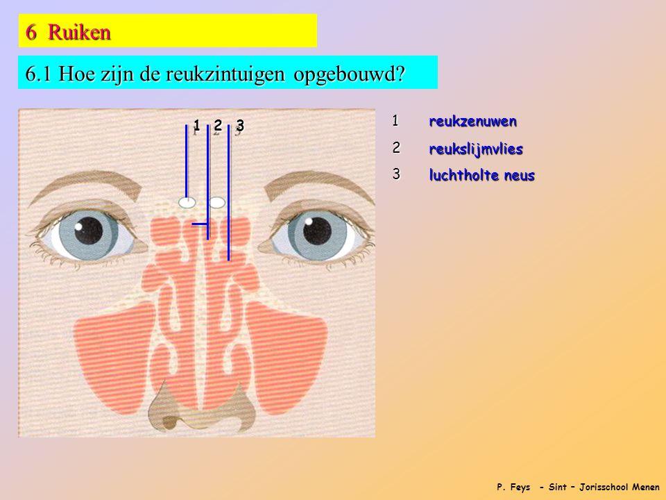 P. Feys - Sint – Jorisschool Menen 6 Ruiken 6.1 Hoe zijn de reukzintuigen opgebouwd? 1 2 3 123reukzenuwen reukslijmvlies luchtholte neus