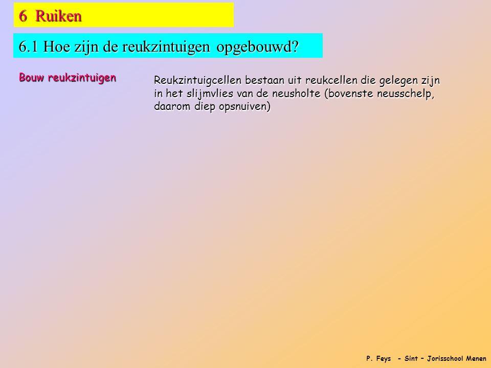 P. Feys - Sint – Jorisschool Menen 6 Ruiken 6.1 Hoe zijn de reukzintuigen opgebouwd? Bouw reukzintuigen Reukzintuigcellen bestaan uit reukcellen die g