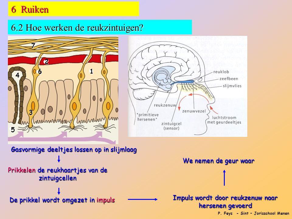 P.Feys - Sint – Jorisschool Menen 6 Ruiken 6.2 Hoe werken de reukzintuigen.