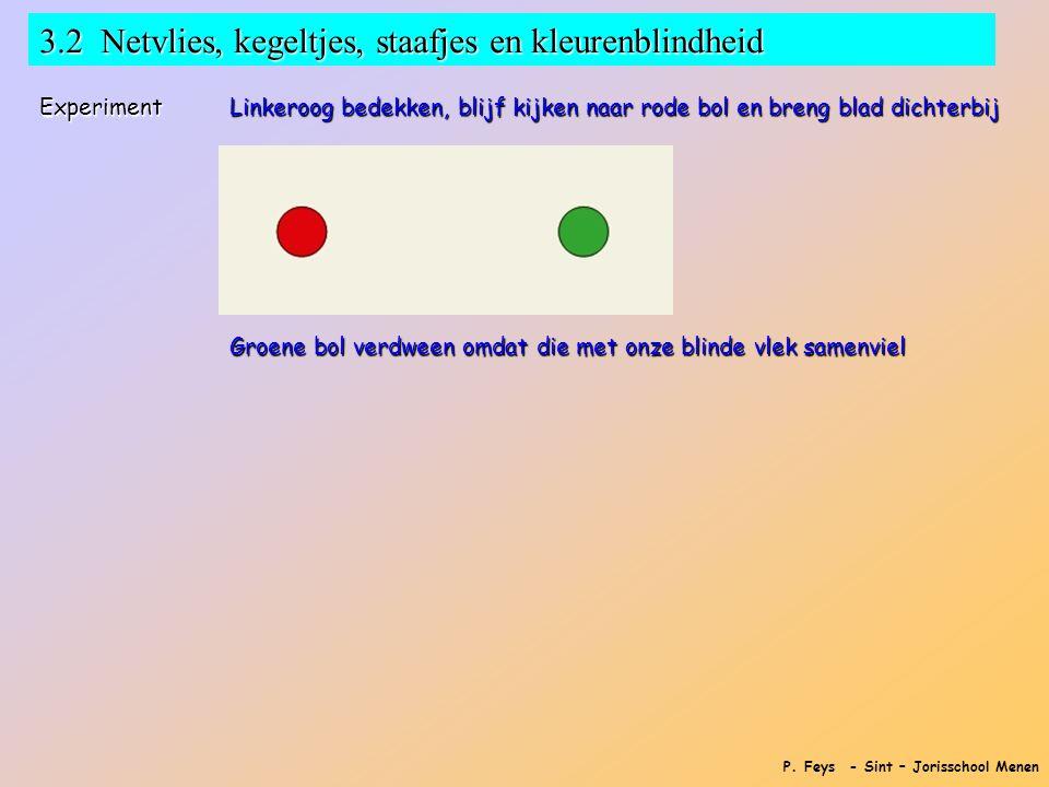 P. Feys - Sint – Jorisschool Menen 3.2 Netvlies, kegeltjes, staafjes en kleurenblindheid Experiment Linkeroog bedekken, blijf kijken naar rode bol en