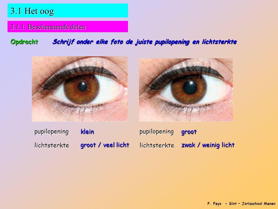 P. Feys - Sint – Jorisschool Menen 3.1 Het oog 3.1.1 Beschermende delen Opdracht Schrijf onder elke foto de juiste pupilopening en lichtsterkte pupilo