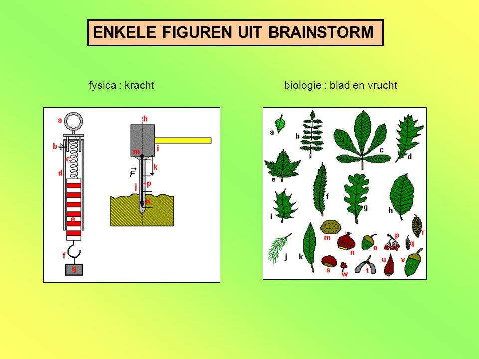 ENKELE FIGUREN UIT BRAINSTORM fysica : krachtbiologie : blad en vrucht