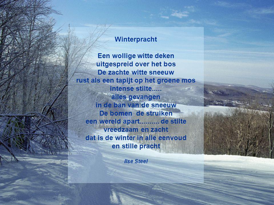 Niets dan sneeuw Niets dan sneeuw in de voorbijrazende trein huizen bomen schilderijen taferelen alles wit zo eindeloos wit takken twijgen fijn geteke