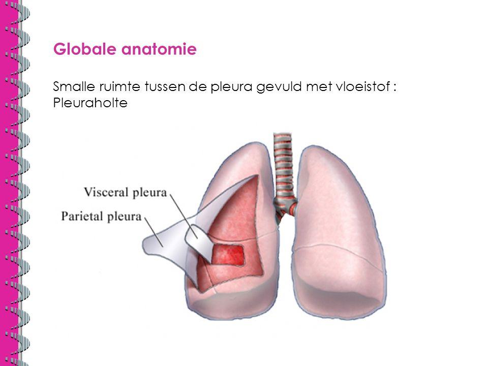 Globale anatomie Smalle ruimte tussen de pleura gevuld met vloeistof : Pleuraholte