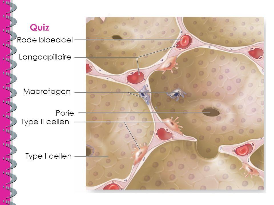 Quiz Rode bloedcel Longcapillaire Macrofagen Porie Type II cellen Type I cellen