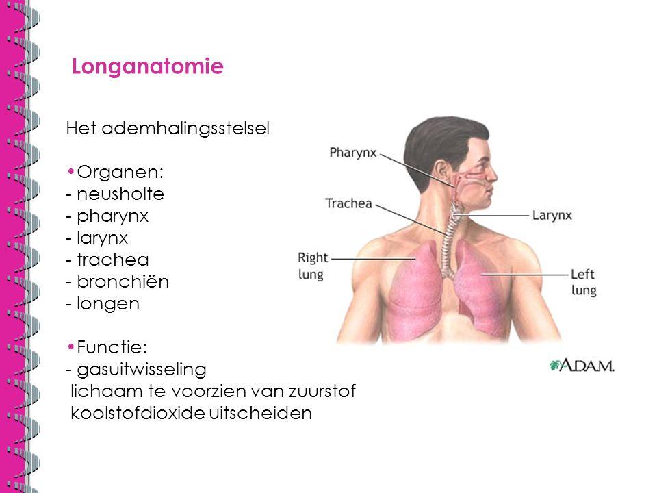 Longanatomie Het ademhalingsstelsel Organen: - neusholte - pharynx - larynx - trachea - bronchiën - longen Functie: - gasuitwisseling lichaam te voorzien van zuurstof koolstofdioxide uitscheiden