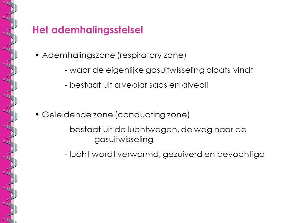 Globale anatomie neusholte keelholte = pharynx strottehoofd = larynx luchtpijp = trachea hogere luchtwegen