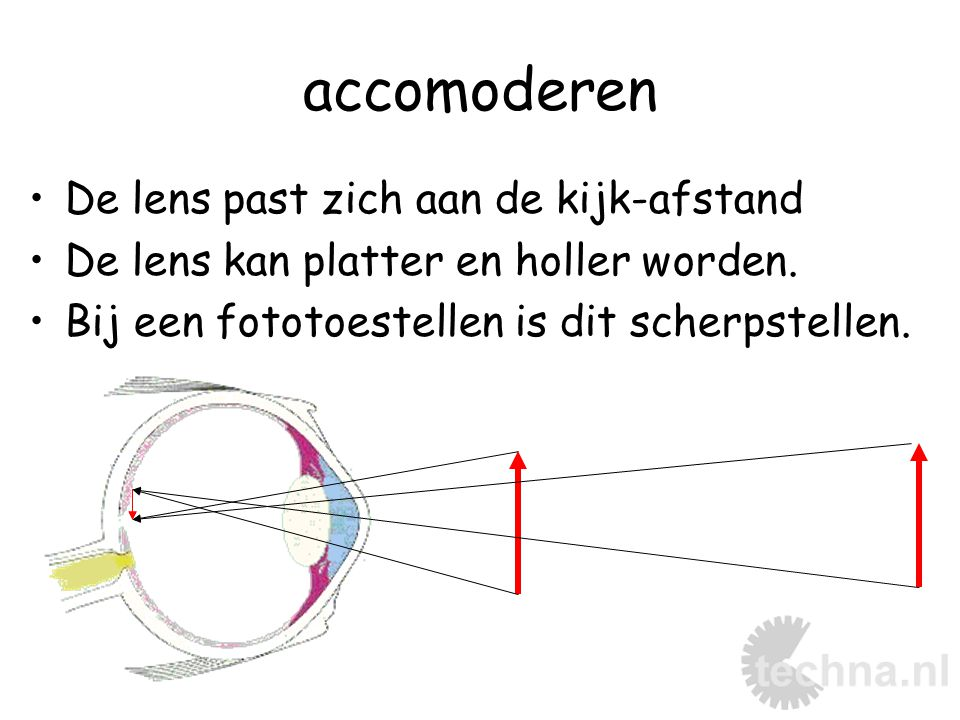 bijziend dichtbij goed zicht verweg niet scherp lenzen blijven te bol Oplossing: bril met negatieve glazen.