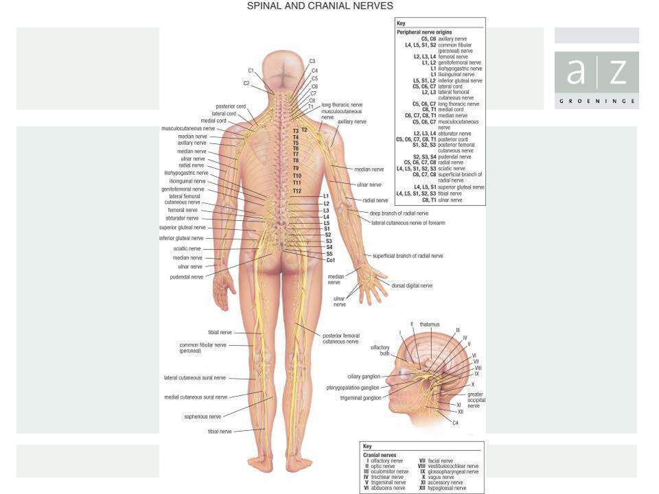 Diagnose: Monofilamententest De test wordt uitgevoerd op 5 verschillende plaatsen.