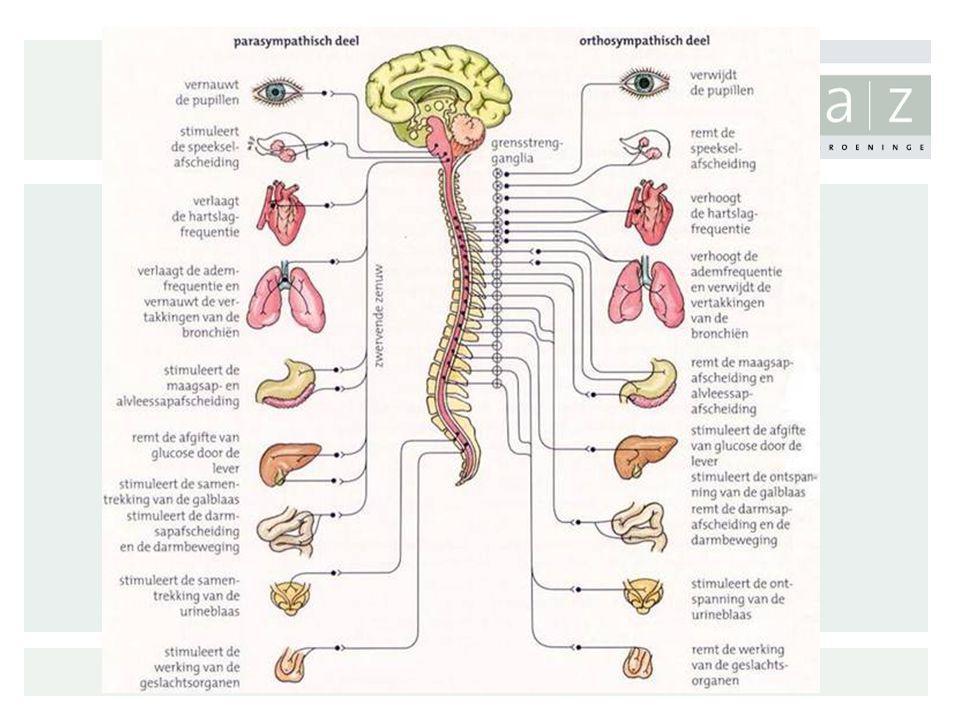 Symptomen vh autonoom zenuwstelsel Zweten: –Verminderd zweten –Uitgesproken zweten in bepaalde regio's –Zweten bij maaltijd –Droge huid Cardiovasculair: –Orthostatische hypotensie –Flauwvallen (mictie, hoesten, inspanning) Pupillen: –Slecht tegen licht kunnen