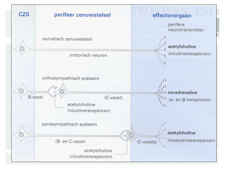 Asymmetrische polyneuropathie Polyradiculopathie : –Lumbaal, thoracic Mononeuropathies –Craniale mononeuropathie –Perifere –Mononeuropathie multiplex