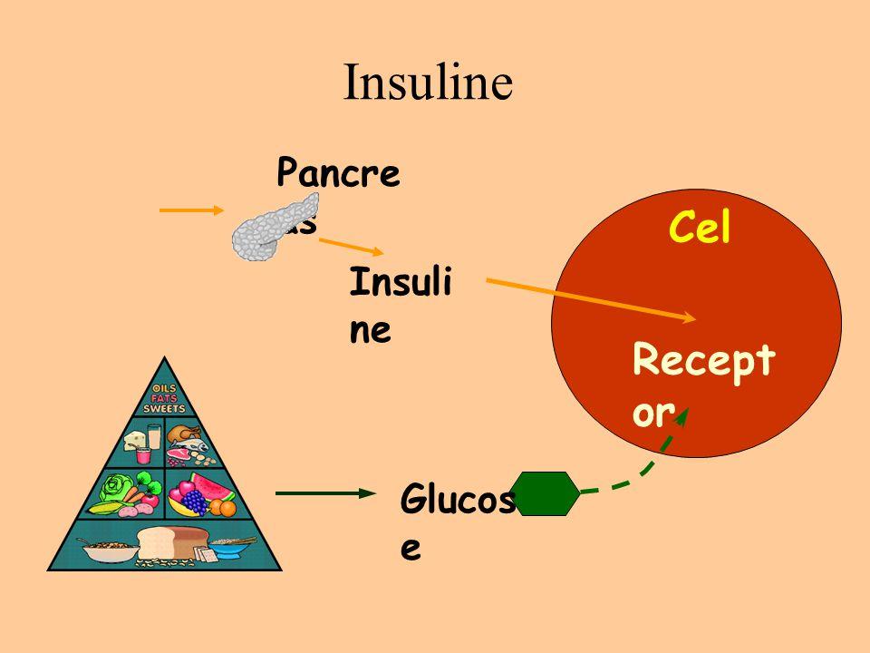 Insuline Cel Recept or Glucos e Insuli ne Pancre as