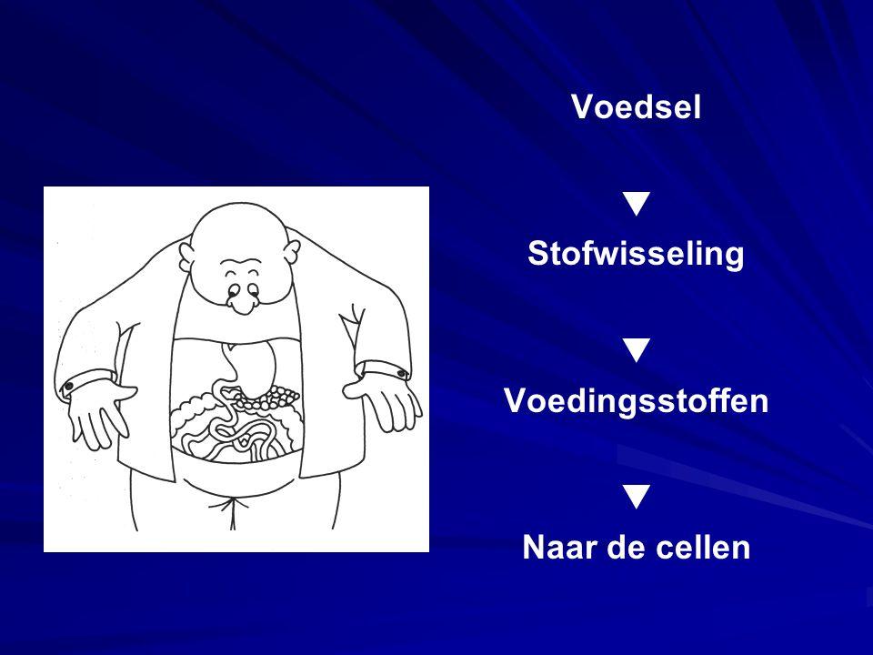 Voedsel  Stofwisseling  Voedingsstoffen  Naar de cellen