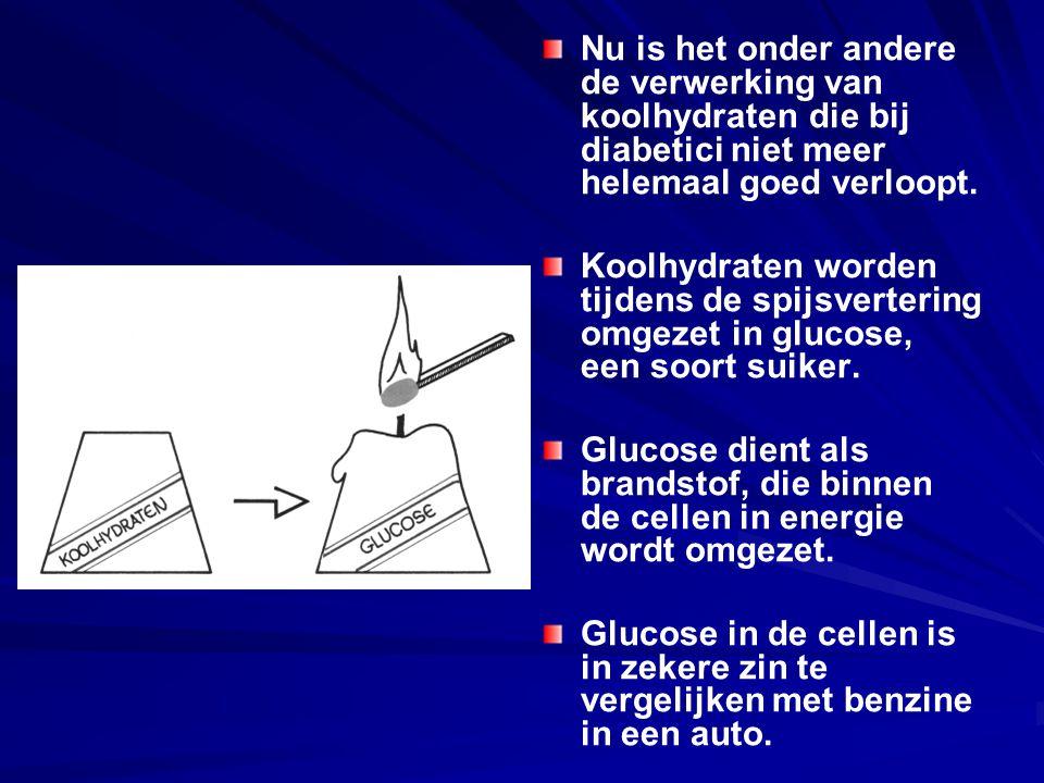 Nu is het onder andere de verwerking van koolhydraten die bij diabetici niet meer helemaal goed verloopt. Koolhydraten worden tijdens de spijsverterin