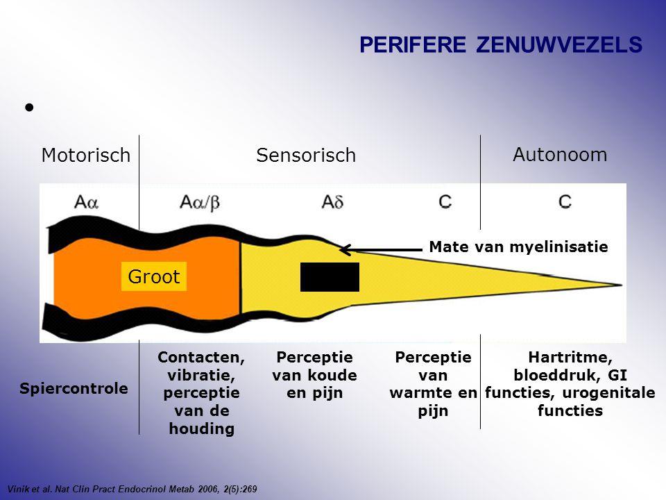 PERIFERE ZENUWVEZELS MotorischSensorisch Autonoom Spiercontrole Contacten, vibratie, perceptie van de houding Perceptie van koude en pijn Perceptie va