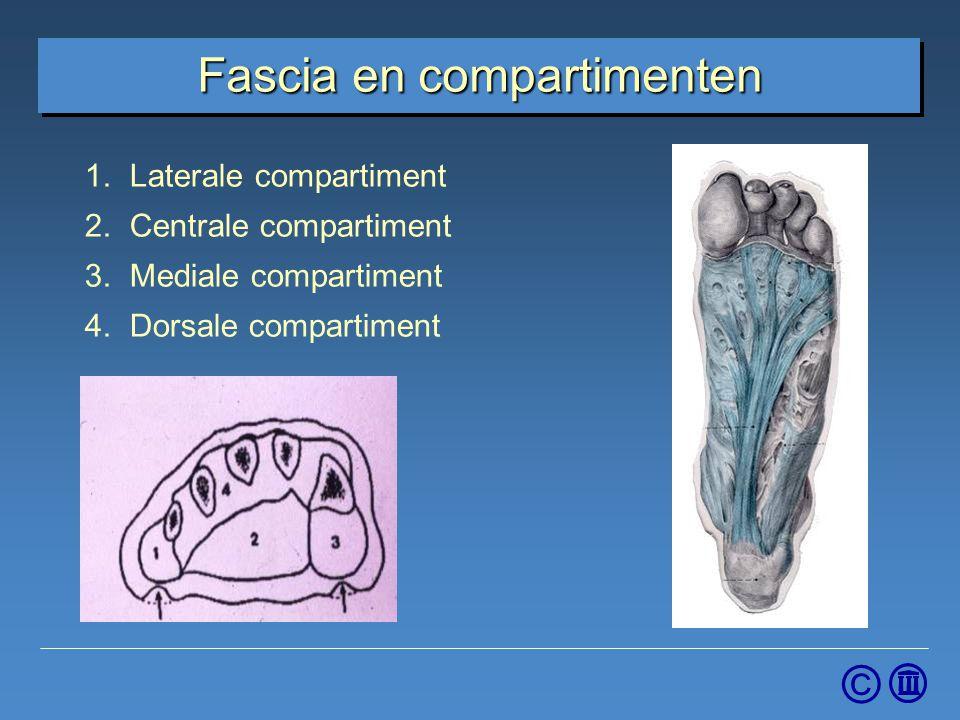 © Fascia en compartimenten 1.Laterale compartiment 2.Centrale compartiment 3.Mediale compartiment 4.Dorsale compartiment