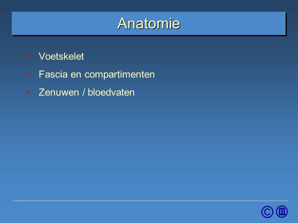 © Anatomie Voetskelet Fascia en compartimenten Zenuwen / bloedvaten