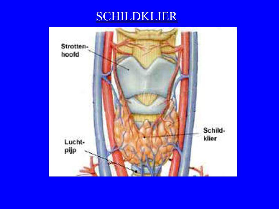 SCHILDKLIER
