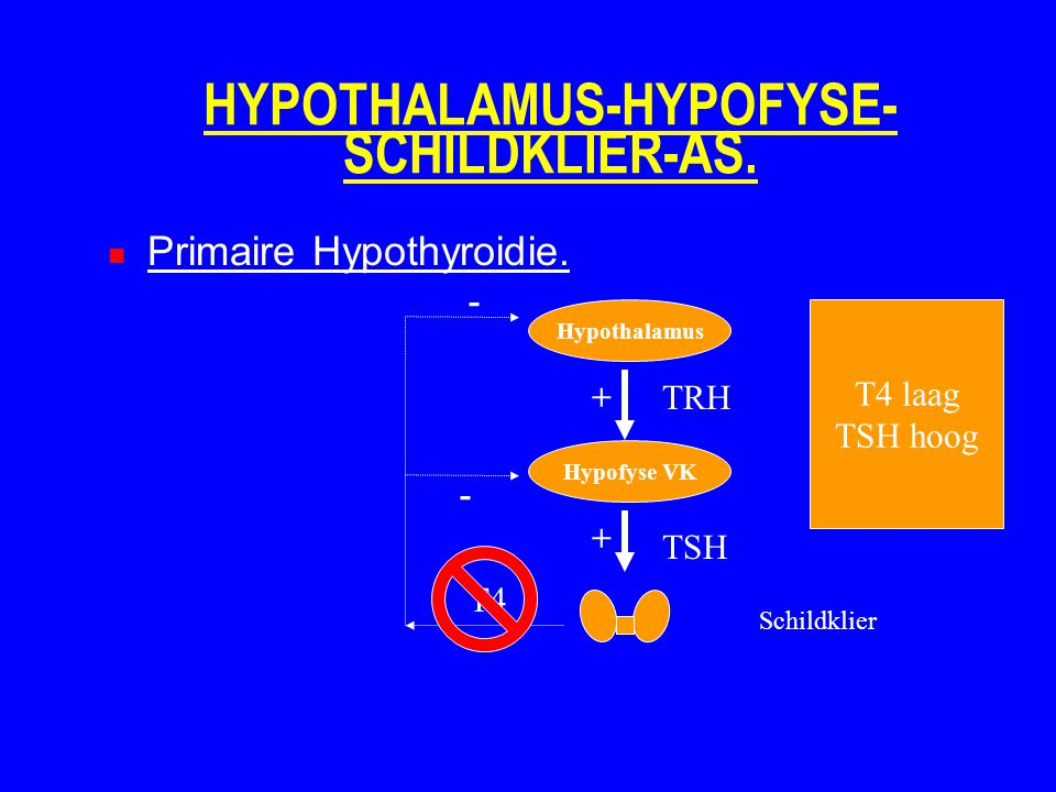 HYPOTHALAMUS-HYPOFYSE- SCHILDKLIER-AS. Primaire Hypothyroidie. Hypothalamus Hypofyse VK Schildklier TRH TSH T4 + + - - T4 laag TSH hoog
