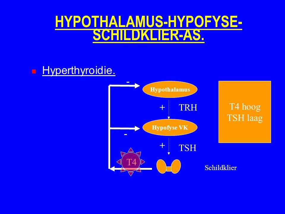 HYPOTHALAMUS-HYPOFYSE- SCHILDKLIER-AS. Hyperthyroidie. Hypothalamus Hypofyse VK Schildklier TRH TSH T4 + + - - T4 hoog TSH laag