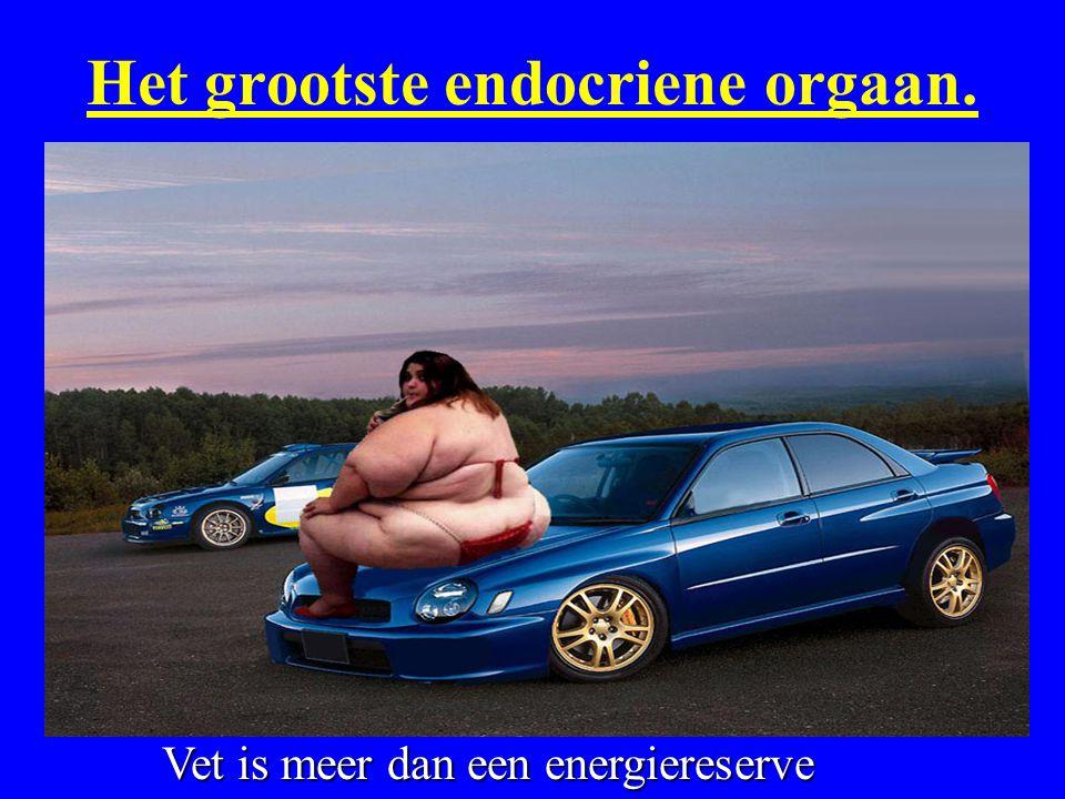 Het grootste endocriene orgaan. Vet is meer dan een energiereserve