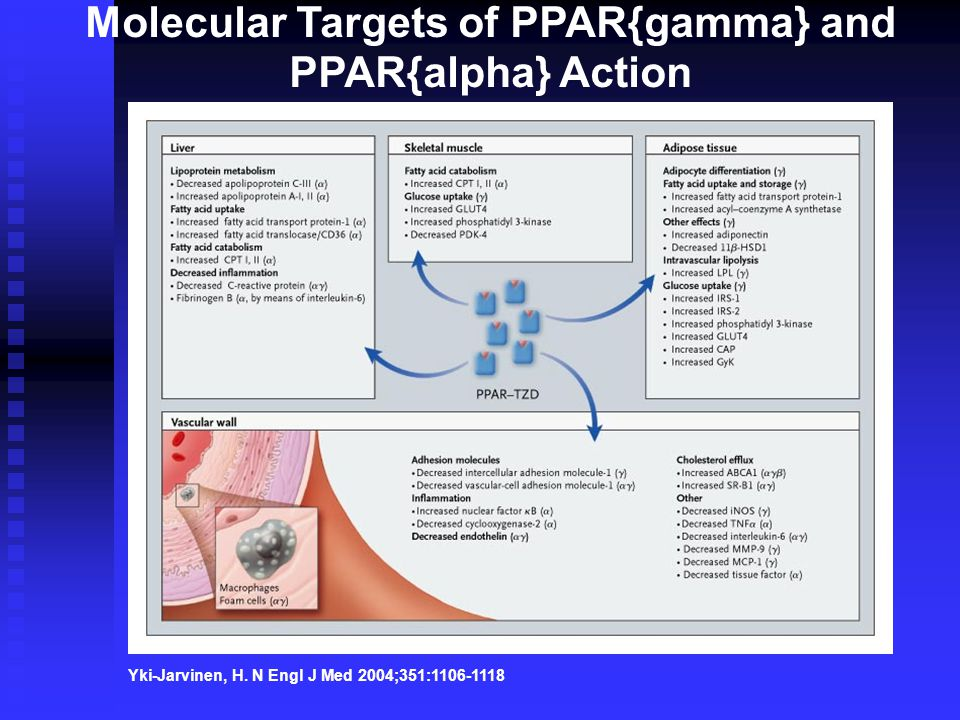 Yki-Jarvinen, H. N Engl J Med 2004;351:1106-1118 Molecular Targets of PPAR{gamma} and PPAR{alpha} Action
