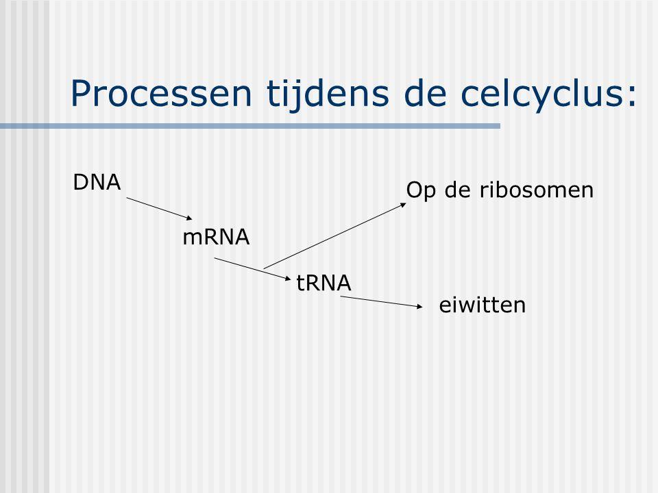 Processen tijdens de celcyclus: DNA mRNA tRNA Op de ribosomen eiwitten