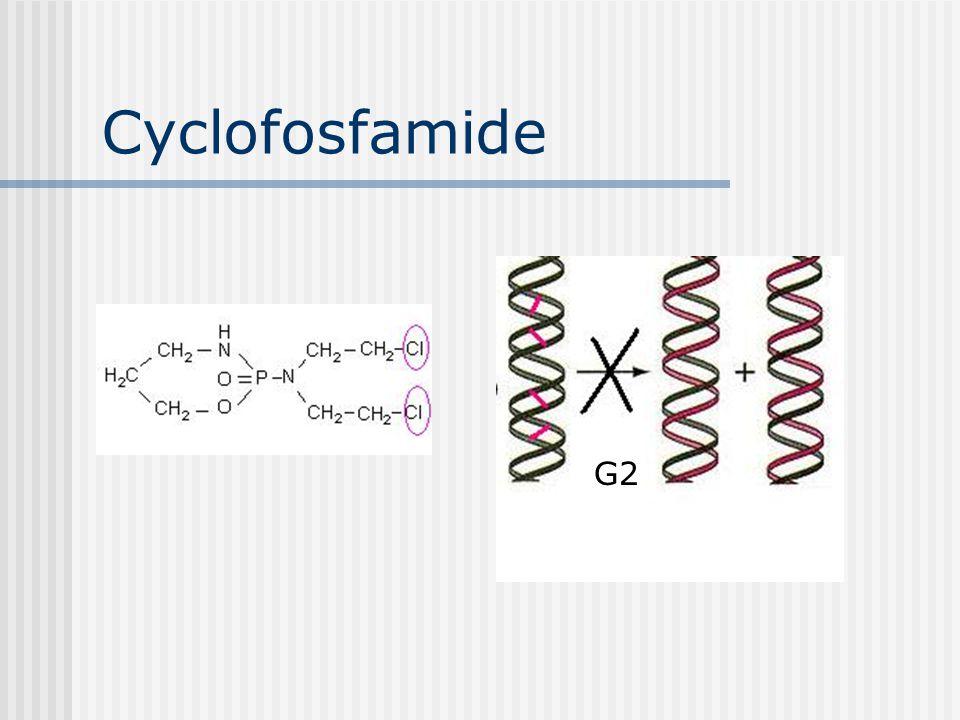 Cyclofosfamide G2