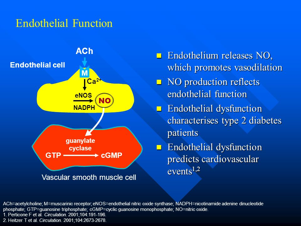 Endothelial Function Endothelium releases NO, which promotes vasodilation Endothelium releases NO, which promotes vasodilation NO production reflects