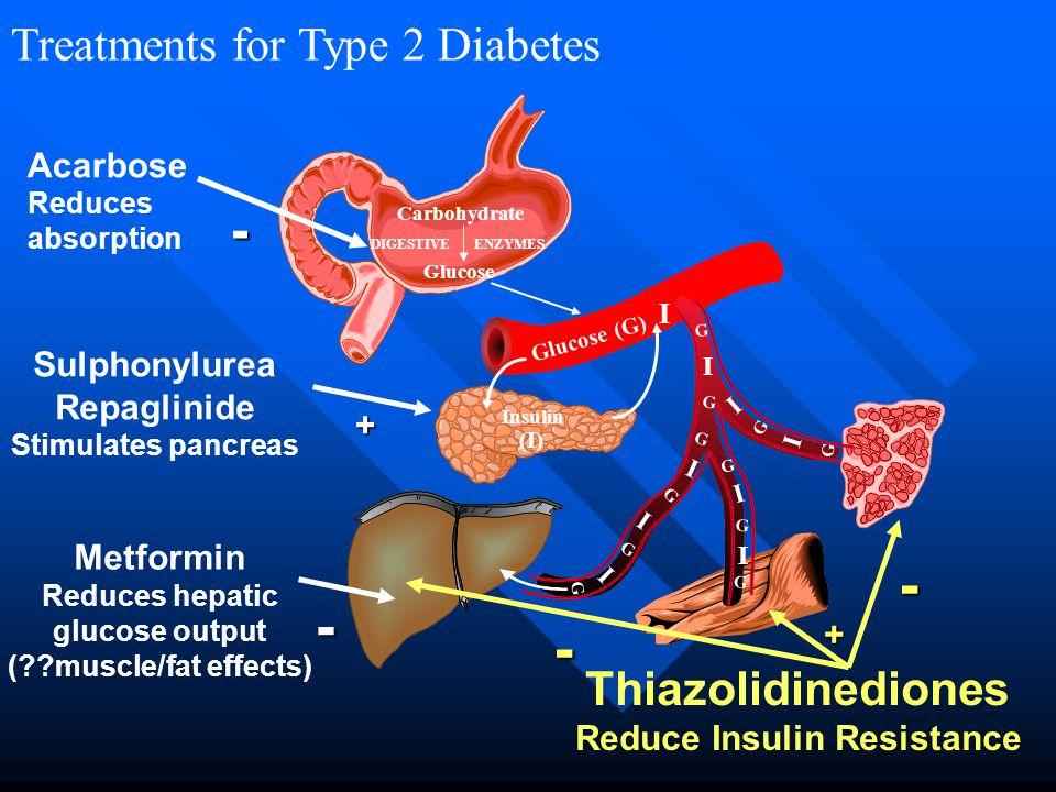 Treatments for Type 2 Diabetes Glucose (G) Carbohydrate Glucose DIGESTIVEENZYMES Insulin (I) I I I I I I I I G G G G G G G G I G G G Acarbose Reduces