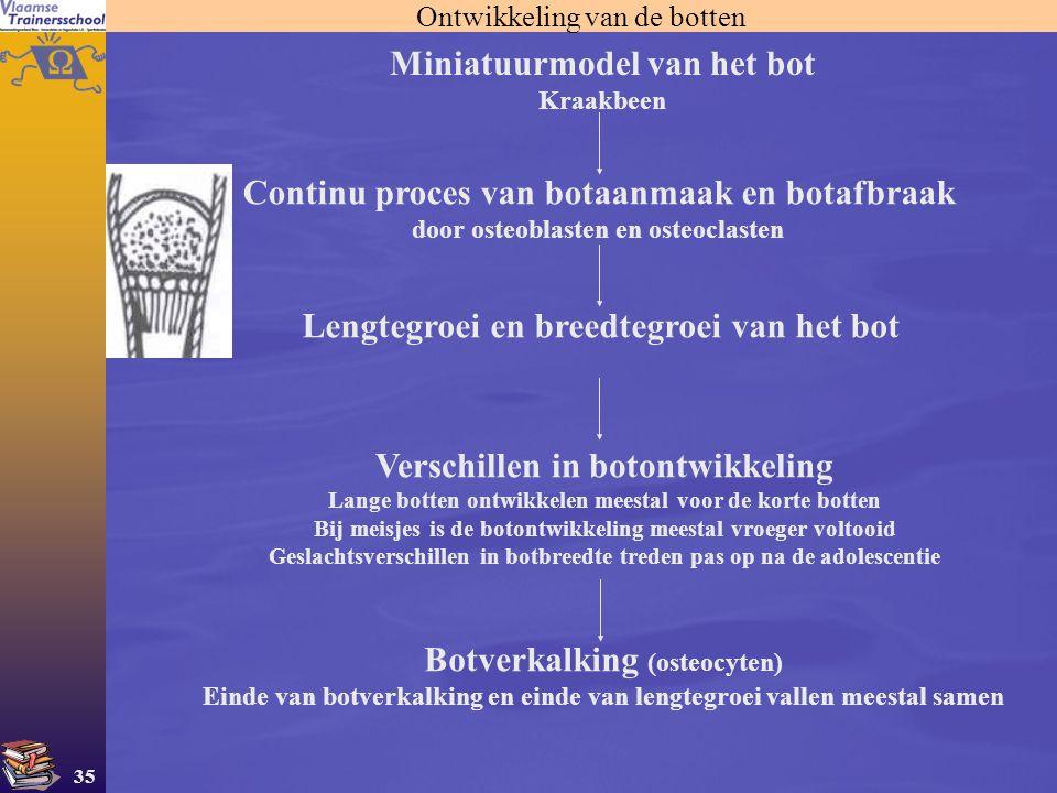 35 Ontwikkeling van de botten Miniatuurmodel van het bot Kraakbeen Continu proces van botaanmaak en botafbraak door osteoblasten en osteoclasten Lengt