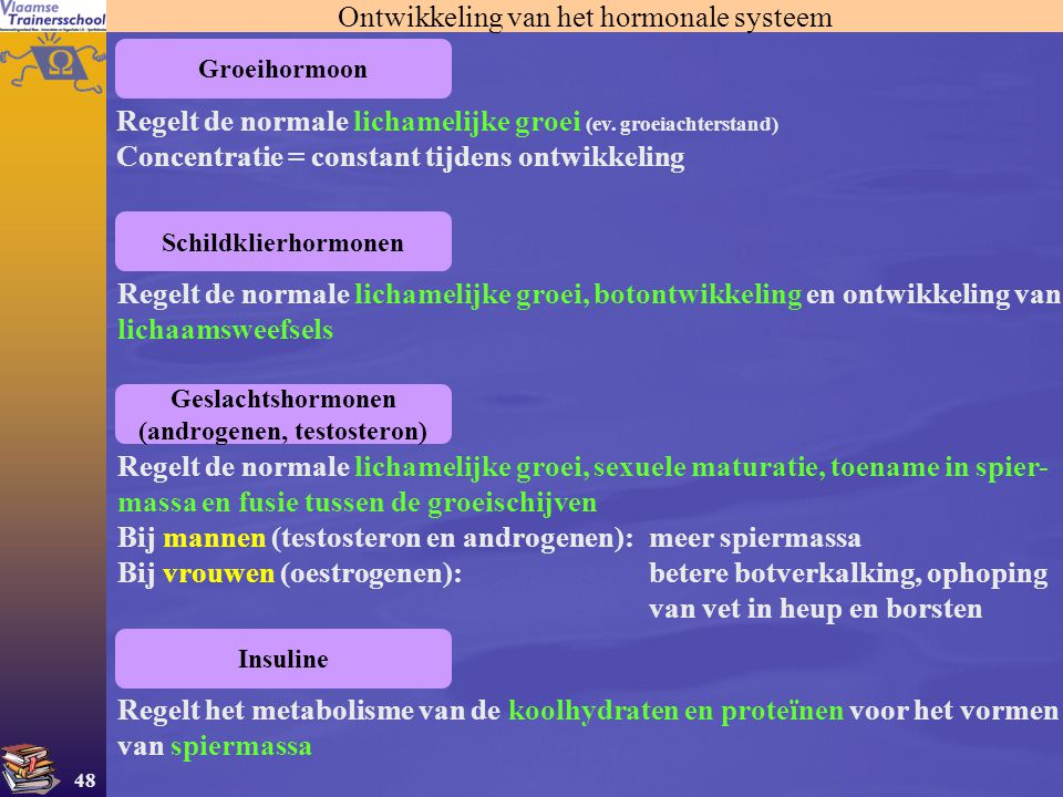 48 Ontwikkeling van het hormonale systeem Groeihormoon Schildklierhormonen Geslachtshormonen (androgenen, testosteron) Insuline Regelt de normale lich