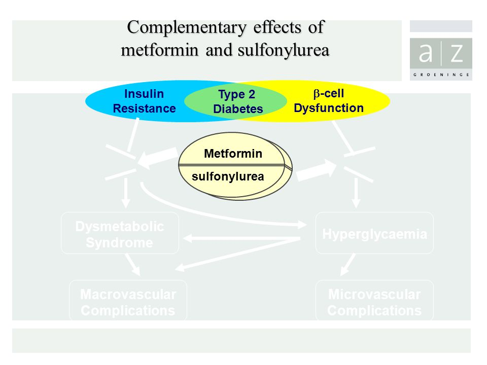 Complementary effects of metformin and sulfonylurea Metformin sulfonylurea Insulin Resistance Type 2 Diabetes  -cell Dysfunction Macrovascular Compli