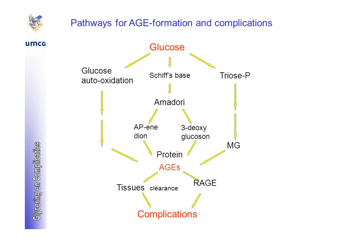 Pathways for AGE-formation and complications Glucose Schiff's base Triose-P auto-oxidation Amadori AP-ene 3-deoxy dion glucoson MG Protein AGEs RAGE Tissues clearance Complications