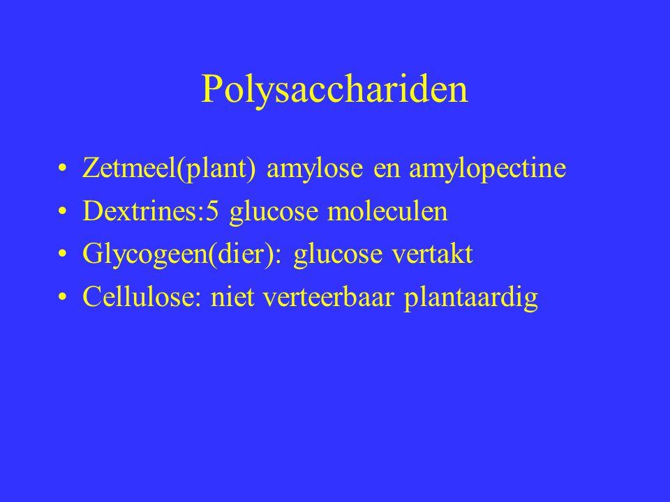 Polysacchariden Zetmeel(plant) amylose en amylopectine Dextrines:5 glucose moleculen Glycogeen(dier): glucose vertakt Cellulose: niet verteerbaar plan