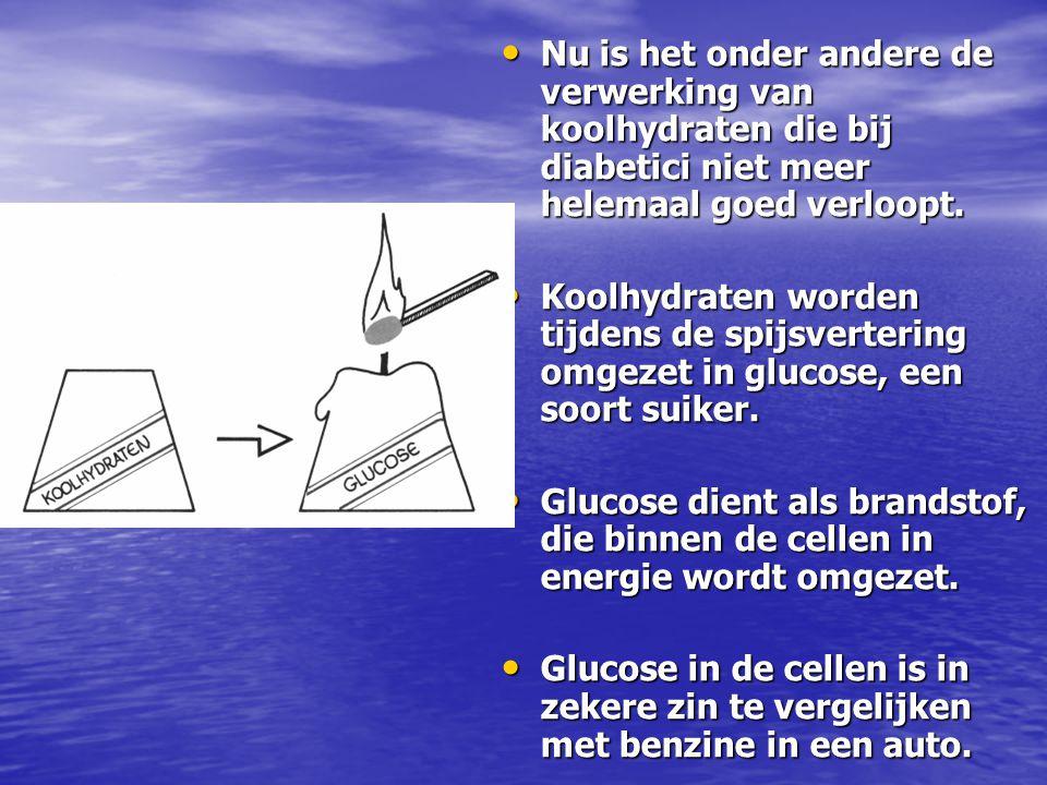 Nu is het onder andere de verwerking van koolhydraten die bij diabetici niet meer helemaal goed verloopt. Nu is het onder andere de verwerking van koo