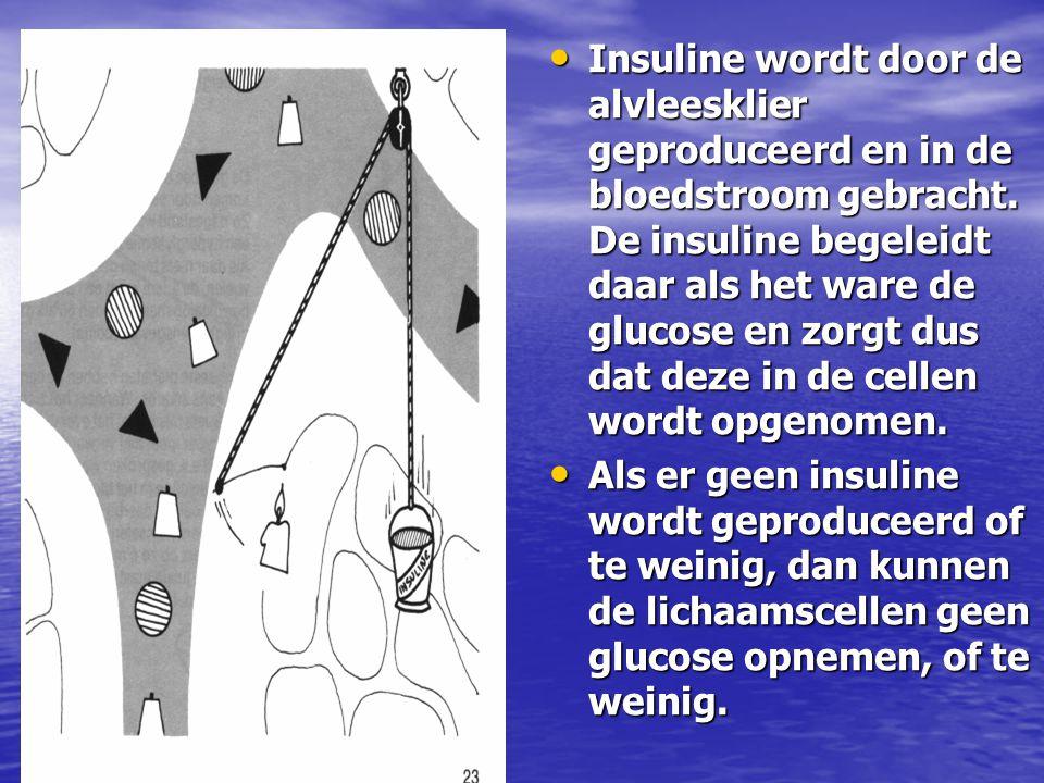 Insuline wordt door de alvleesklier geproduceerd en in de bloedstroom gebracht. De insuline begeleidt daar als het ware de glucose en zorgt dus dat de