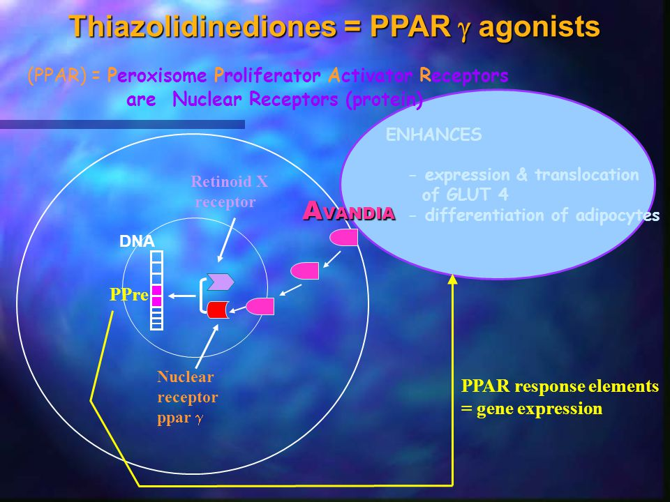 Thiazolidinediones = PPAR  agonists (PPAR) = Peroxisome Proliferator Activator Receptors are Nuclear Receptors (protein) DNA Nuclear receptor ppar 