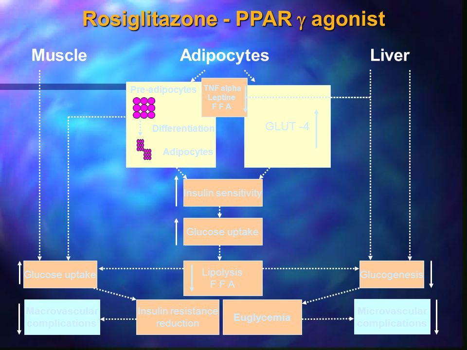 Rosiglitazone - PPAR  agonist MuscleAdipocytesLiver GLUT -4 Pre-adipocytes Differentiation Adipocytes TNF alpha Leptine F F A Insulin sensitivity Glu