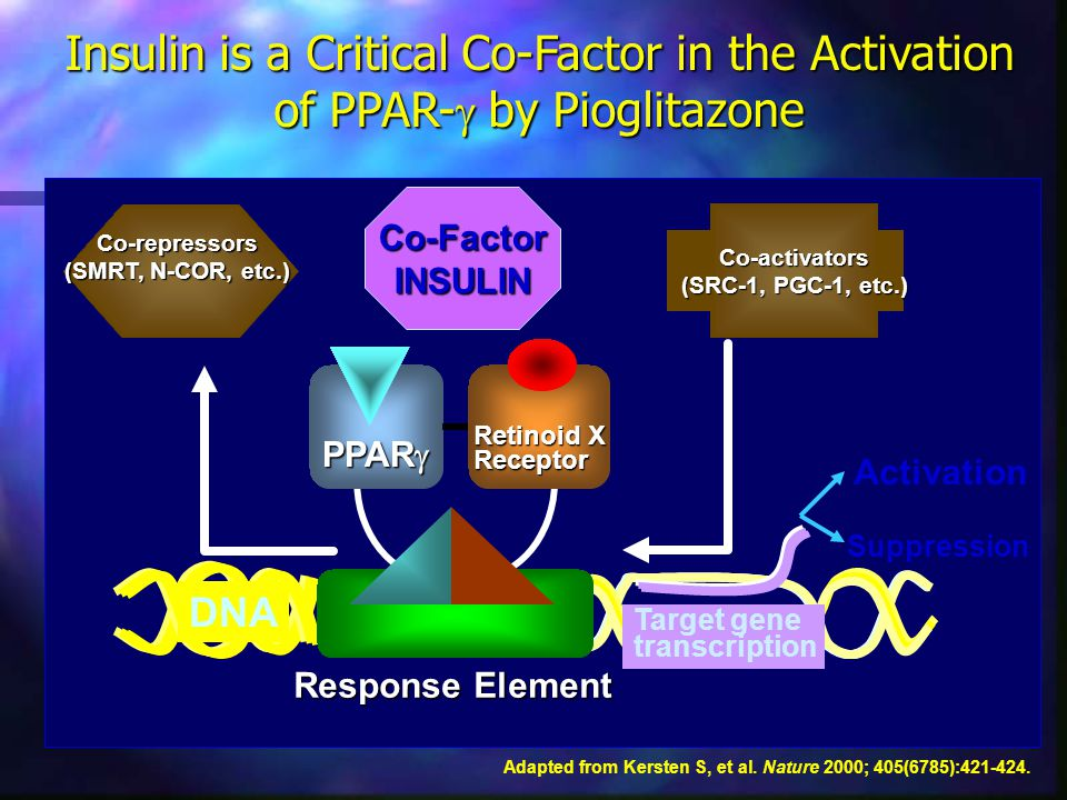 Insulin is a Critical Co-Factor in the Activation of PPAR-  by Pioglitazone Response Element Target gene transcription PPAR  Retinoid X Receptor DNA Activation Suppression Co-repressors (SMRT, N-COR, etc.) Co-activators (SRC-1, PGC-1, etc.) Co-FactorINSULIN Adapted from Kersten S, et al.