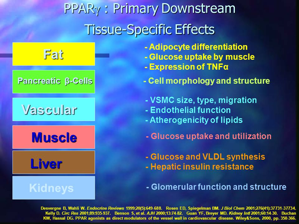 PPAR  : Primary Downstream Tissue-Specific Effects Fat - Adipocyte differentiation - Glucose uptake by muscle - Expression of TNFα Pancreatic β-Cells