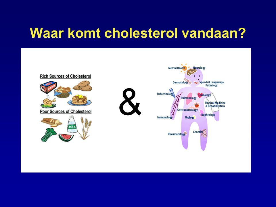 Waar komt cholesterol vandaan? Lichaam produceert cholesterol &