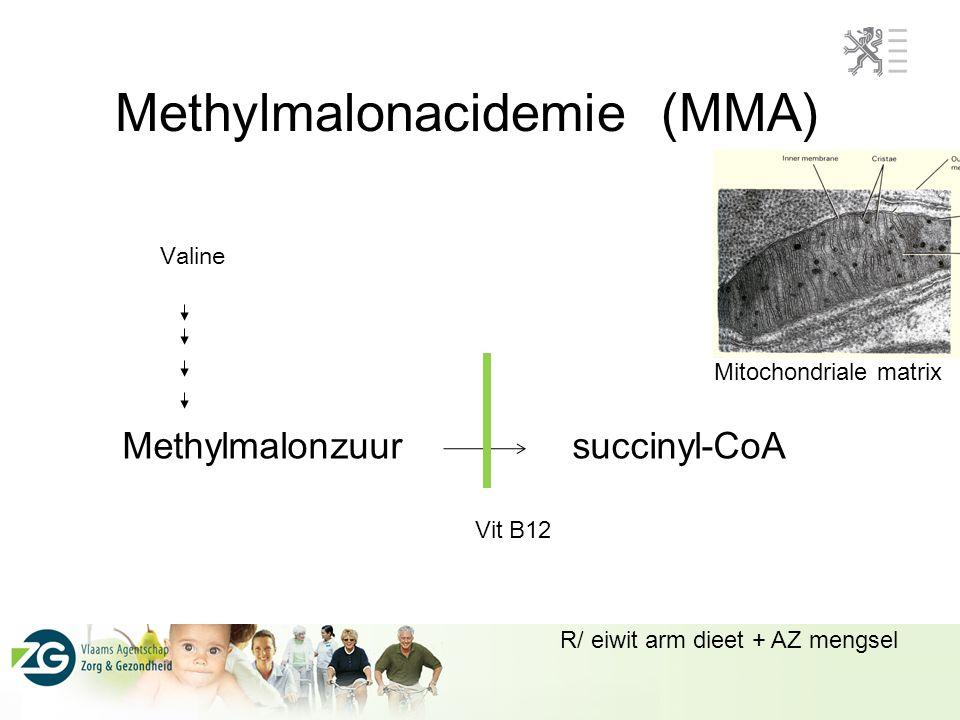 Methylmalonacidemie (MMA) Methylmalonzuur succinyl-CoA Vit B12 Mitochondriale matrix Valine R/ eiwit arm dieet + AZ mengsel